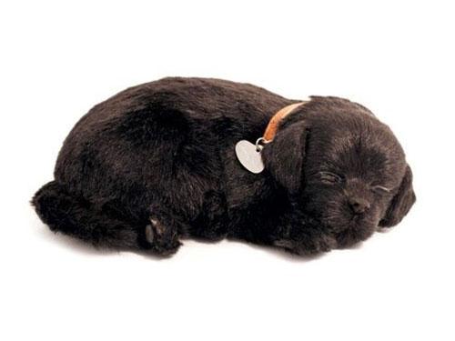 Perfect Petzzz zwarte labrador