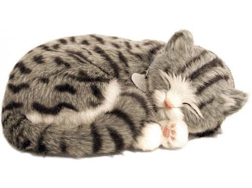 Perfect Petzzz Tabby kat